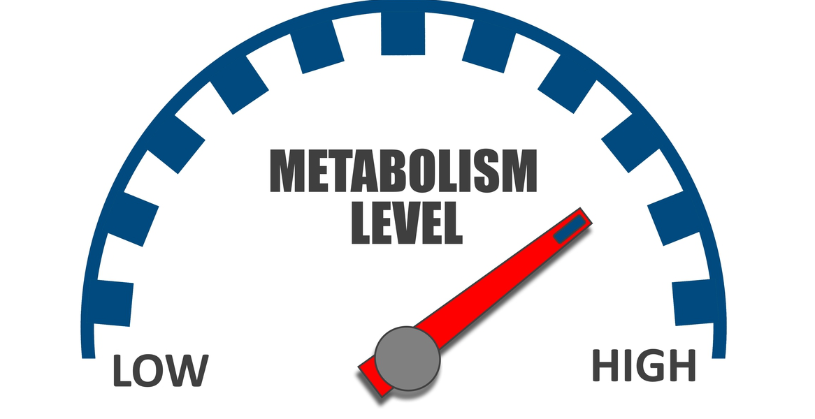Resting metabolism not slowing…